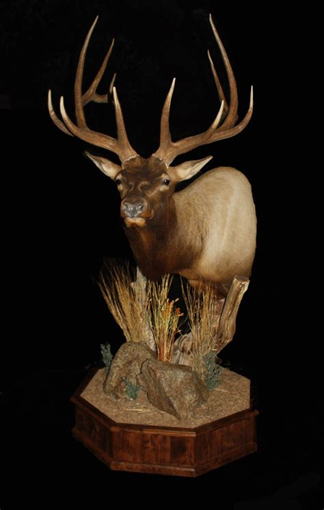 Elk Pedestal Mount elk pedestal clay goldman mogollon taxidermy taxidermy coueswhitetail discussion forum