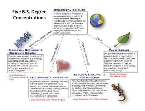 bachelors degree in biology biology department undergraduate degrees louis