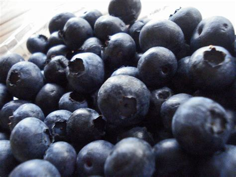 are blueberries ok for dogs blueberries for dogs great treat and safe for dogs pet food