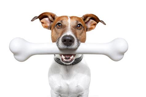 dogs bones kale for strong bones carolina biscuit company