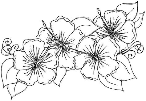 flower coloring printable flower coloring pages freepsychiclovereadings