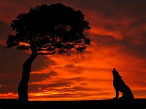 Elephant Shower Curtain Wolf Calling For Mate Sunset Silhouette Series Photograph