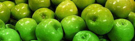 imagenes de ideas verdes verde en el dise 241 o web conectando con la naturaleza