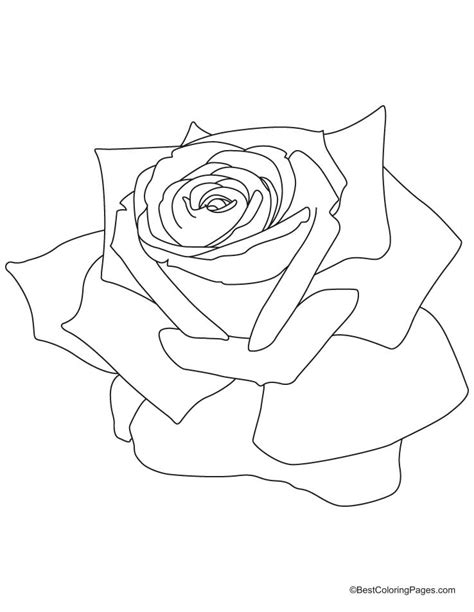 coloring pages rose az coloring pages rose coloring pages printable az coloring pages