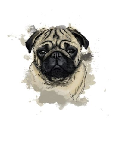 why is my pug so itchy logic who we are
