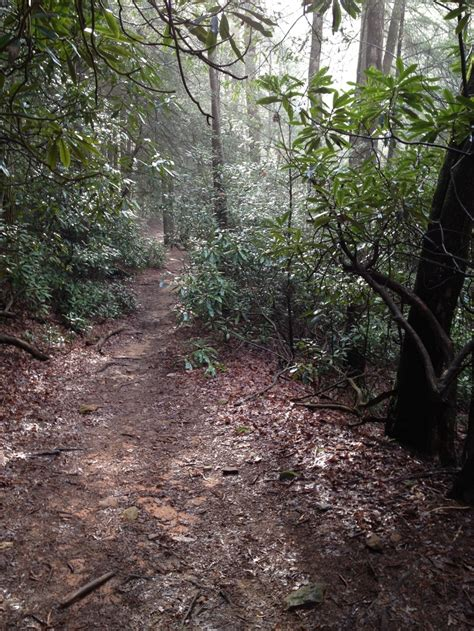 georgia section of appalachian trail 123 best images about take the path on pinterest hiking