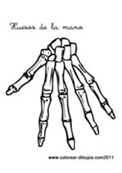 imagenes infantiles huesos dibujos de esqueletos para colorear y pintar huesos