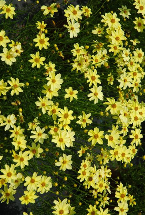 late blooming perennials color your fall garden with perennials