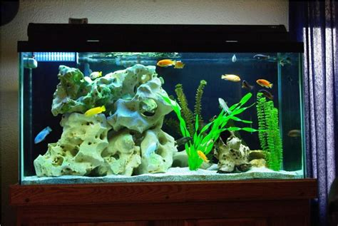 tropical fish home decor tropical fish home aquarium aquarium design ideas