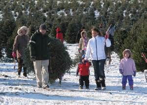 christmas tree farms upstate ny ctfany org get a real tree