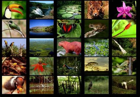 tropical forest animals and plants what of fauna lives there all about the