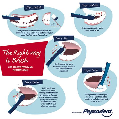 how to brush teeth beautysouthafrica how to how to brush your teeth correctly