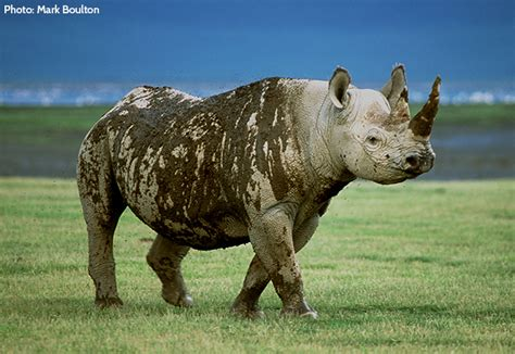 extinct breeds why does it matter if a species becomes extinct wildlife foundation