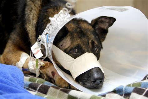 retired dogs florida legislature 2015 retired k9s to get vet care florida bill post