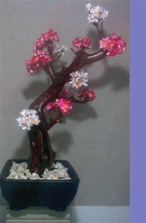 galeri berbagi ilmu  membuat bonsai hias cantik