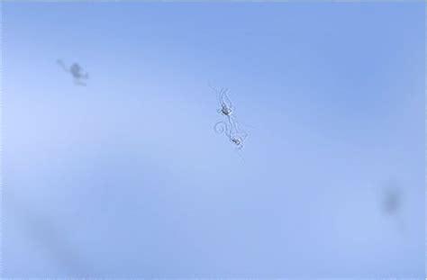 mucche volanti eyeglass24 mouches volantes brillengl 228 ser putzen hilft