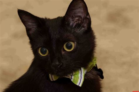 of a black cat bones on black cat friday cats hq pictures