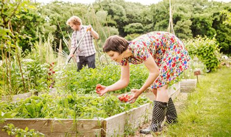 plymouth allotments national allotments week offers tips to protect your plots