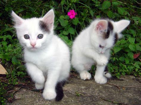 cute cat wallpapers hd