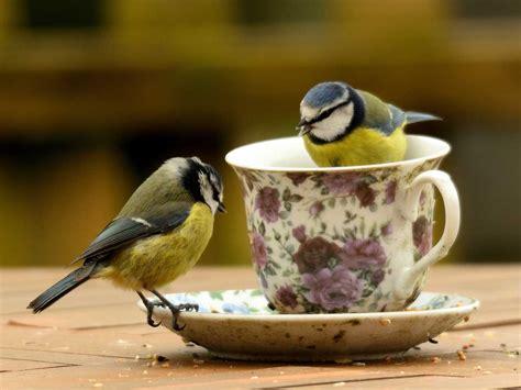 bird for the garden how to attract birds into your garden saga