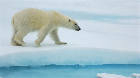 big polar archive for july 2012