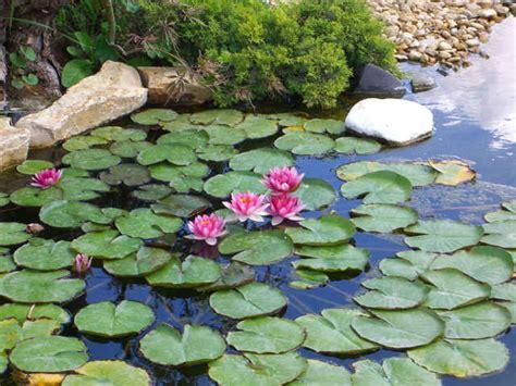 vasche per tartarughe acquatiche piante acquatiche ossigenanti palustri vivavio sommerse