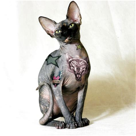 tattooed hairless cat on cats designs meaning pictures gallery