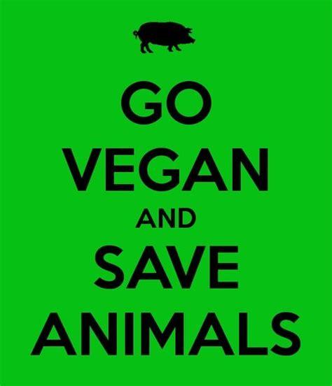 images  vegan   lifestyle  pinterest buddhists portia de