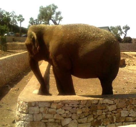 ingresso zoo fasano fasano le emozionanti avventure nella natura