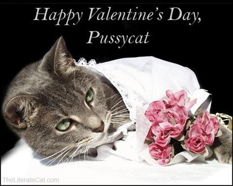 happy valentines day cat the world s catalogue of ideas