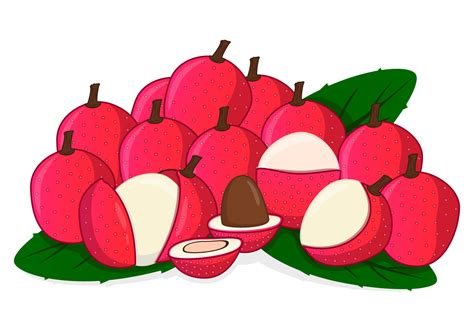 lychee fruit drawing fresh sweet lychee download free vector art stock