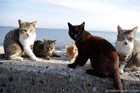 cat island in japan ainoshima yet another cat island in japan 187 zooming japan