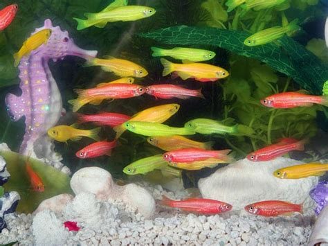 types of aquariums types of aquarium fish for good luck photos pics 240953
