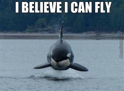 Whale Meme - image gallery whale meme