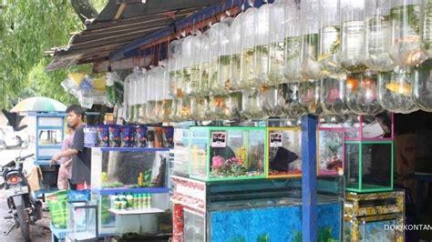 Lu Hias Kayu pasar mangkura tujuan penggemar ikan hias 1