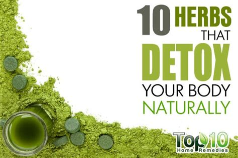 How To Detox Your Home Naturally by 10 Herbs That Detox Your Naturally Top 10 Home Remedies