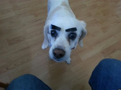 eyebrows on dogs 31 dogs with eyebrows pictures huffpost