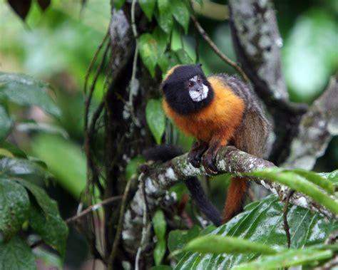 jungle animals the rainforest plants rainforest