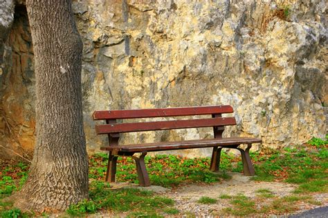 benching alone free images tree outdoor wood bench trunk alone