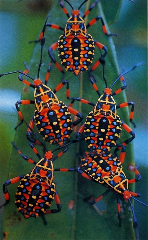 colorful insect www pixshark images galleries with