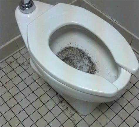 bathroom ants ants in bathroom 28 images ghost ants invade a