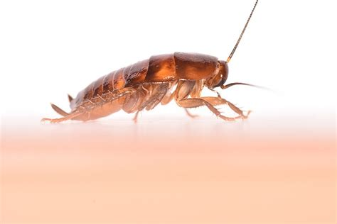 bed bugs exterminator nyc best bed bug exterminator nyc bed bugs exterminator nyc 28