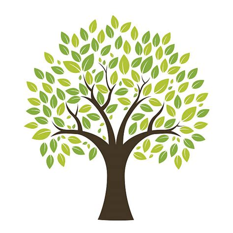 Royalty Free Tree Clip Art Vector Images Illustrations Istock Royalty Free Family Tree Clip Vector Images Illustrations Istock