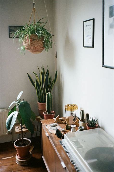 Living Room Corner Plants Plants Hanging Plants And Cactus On