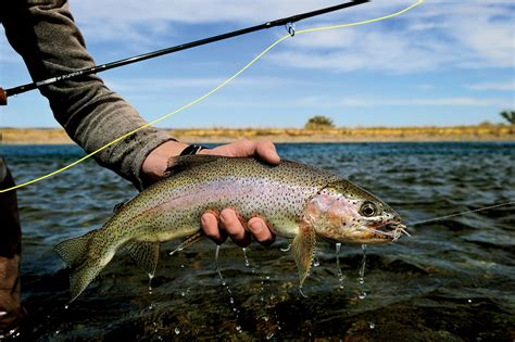 1000 images about fly fishing the best fly fishing in argentina departures