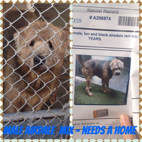 dogs needing homes kill dogs
