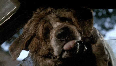 Mad Dogs The New Rabies Plague pet sematary gif find on giphy