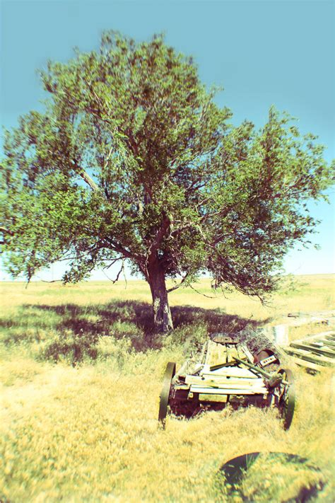 vintage tree by chase009 on deviantart