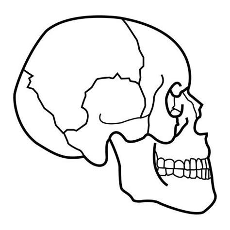 imagenes infantiles huesos huesos del craneo humano para colorear imagui