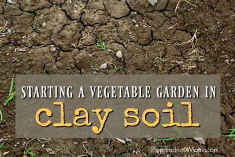 Starting A Vegetable Garden In Clay Soil Preparednessmama What To Add To Vegetable Garden Soil